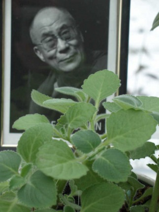 Dalai Lama Bild mit Flower of Change